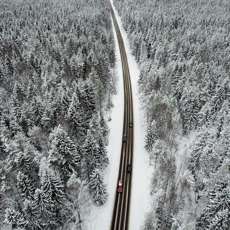 Дорога через зимний лес в Ленинградской области