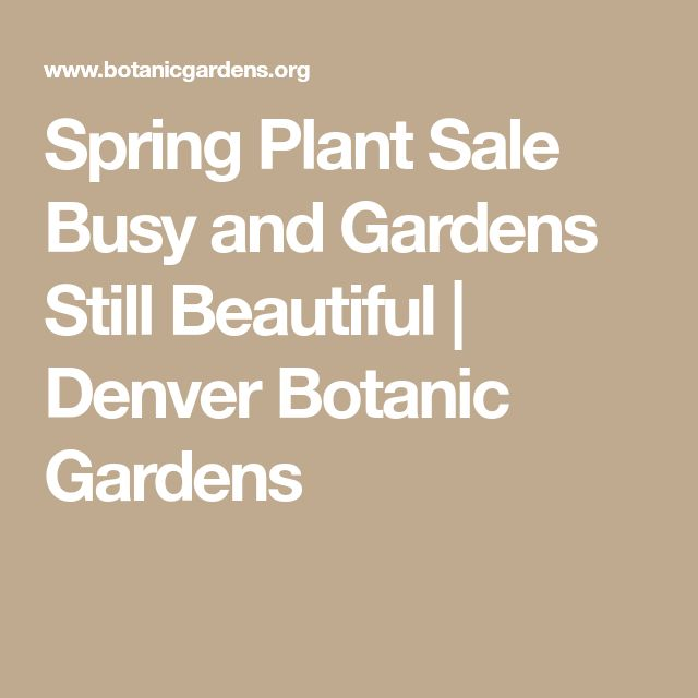 Spring Plant Sale Busy and Gardens Still Beautiful | Denver Botanic Gardens