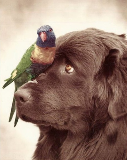 Awww... What a look!  @Alex Elmore: Birddog, Sunday Brunch, Newfoundland Dogs, Friends, Animal Baby, Birds Dogs, Birds Of Paradis, Pet, Baby Animal