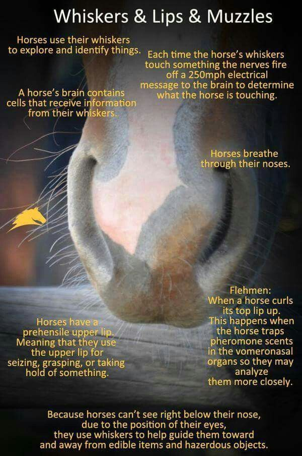 Horse Information                                                       …