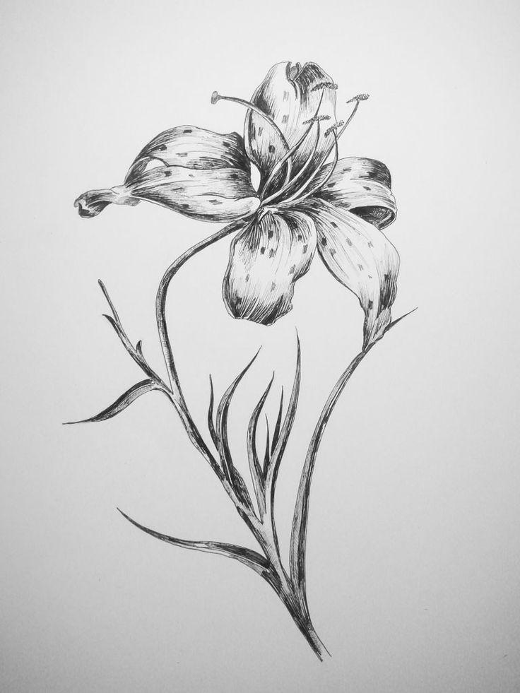 лилии рисунок карандашом - Поиск в Google