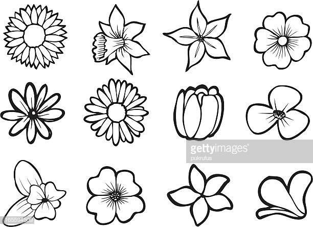 Illustrations Of Six Tropical Flowers Also Available In Full Color Flower Line Drawings Simple Flower Drawing Flower Art Drawing