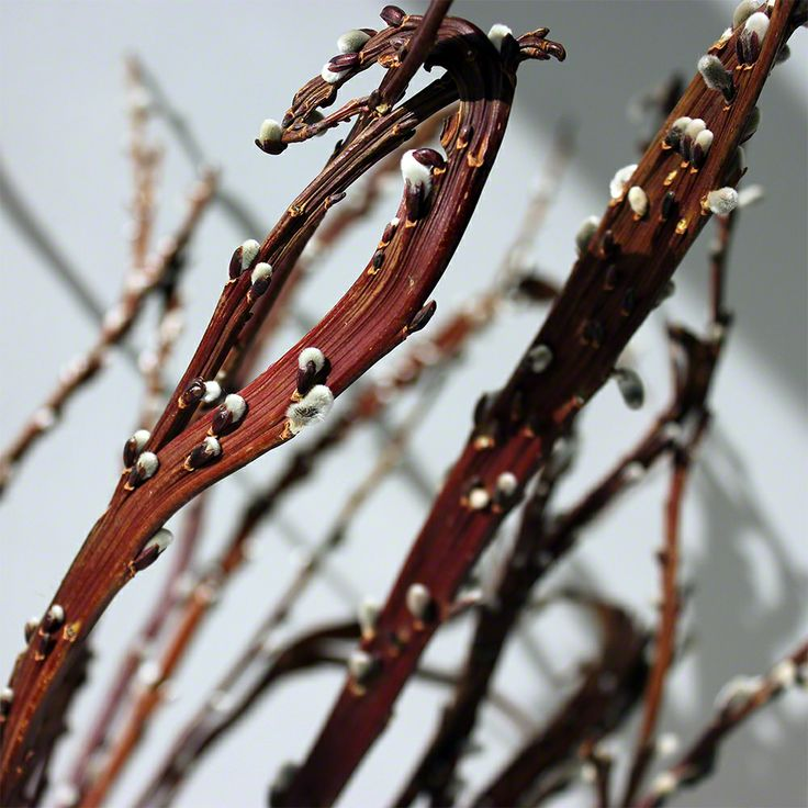 Nettleton Hollow is a leading provider of high-quality decorative branches and other lasting botanical material, based in Brooklyn, NY. Here is where we tell you a bit more about the products and other vaguely related topics.