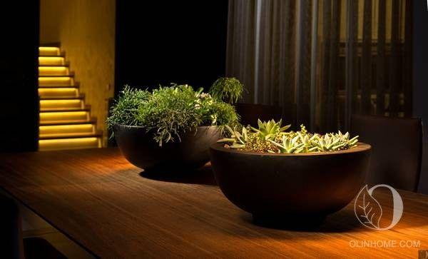 Две фантазийные композиции: суккуленты в эксклюзивных темных кашпо из прочного и легкого материала. Идеальный вариант для озеленения дома.
