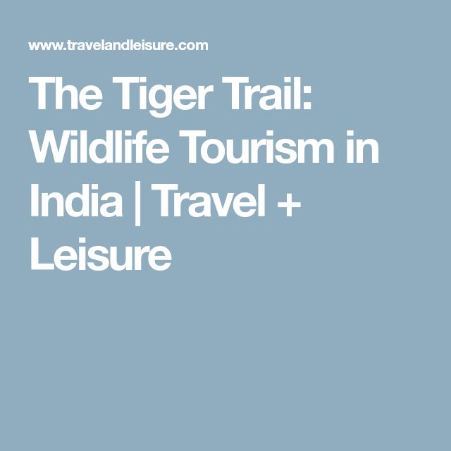 The Tiger Trail: Wildlife Tourism in India | Travel + Leisure