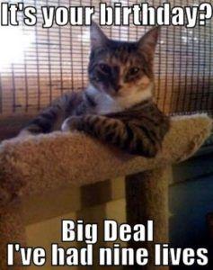 5dfb7304d7233a9021fbe985b5ceeddb happy birthday cat meme cat memes 56 best happy birthday cat meme images on pinterest happy