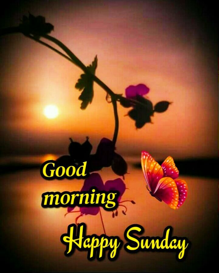 Good Morning Images For Whatsapp Free Download Hd Wallpaper Pictures Photos Of Good Good Morning Happy Sunday Good Morning Sunday Images Good Morning Sister Good morning sunday hd wallpaper