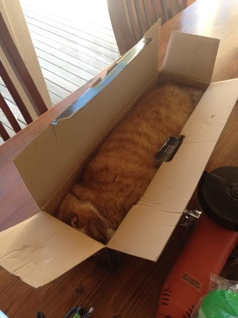 14) Cat in a box!