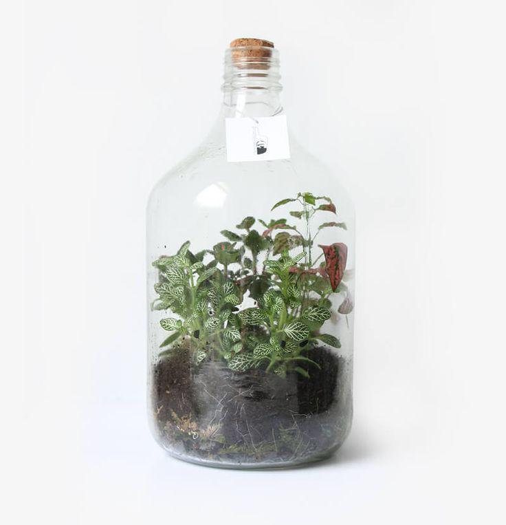 Cagaraan ecosysteem - Wonderlijk Woud