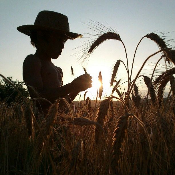 Imagen tomada en un campo de maíz por Joan Carles (@joan carles castell)