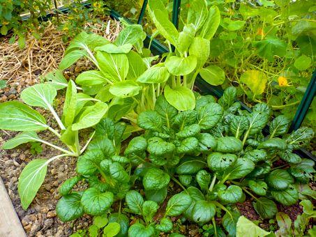 85 best Potager bio images on Pinterest Gardening, Greenhouse - Ou Trouver De La Terre De Jardin