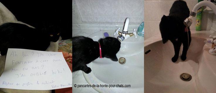 Haa sacrée Réglisse :) Et vous ils boivent aussi au robinet ?