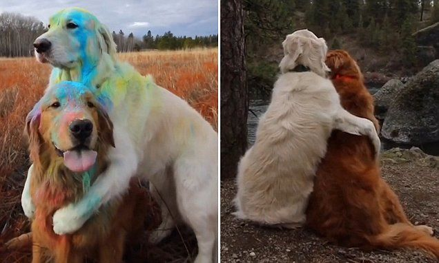 Dogs are best friends and love snuggling and cuddling together