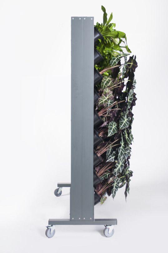 Vertical Garden, Green Wall, Plants indoors, Design