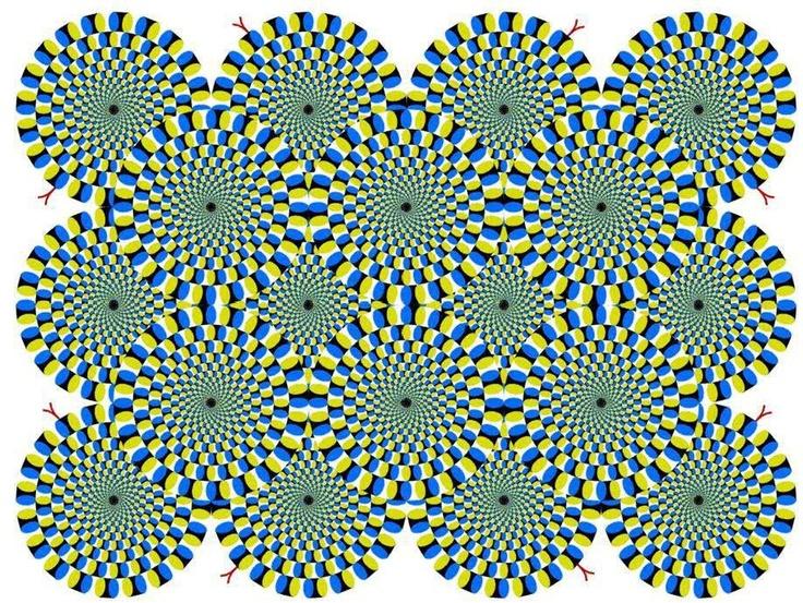 Las ilusiones ópticas de un gato