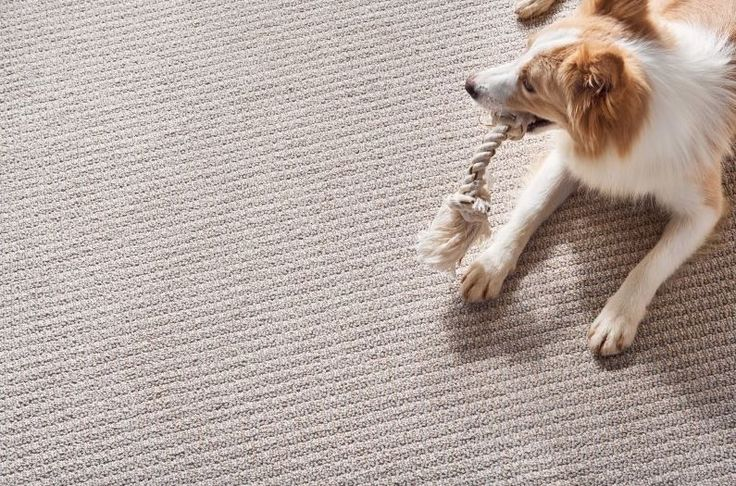 Check out this awesome STAINMASTER PET PROTECTION Carpet