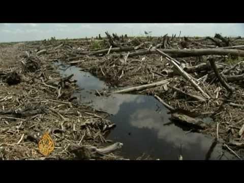 Important Deforestation Video:  Borneo's burning forests - 14 Jul 09