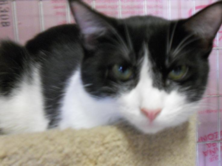 11++ Kanawha county animal shelter ideas