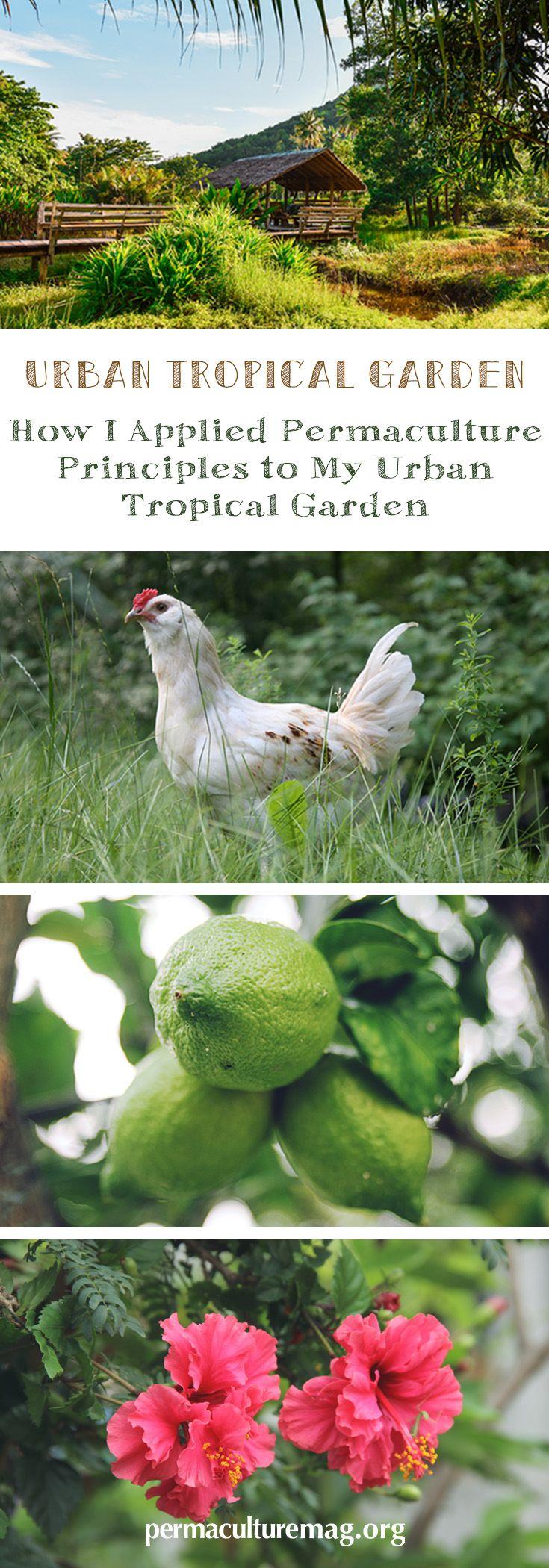 879 best garden images on pinterest garden ideas gardening and