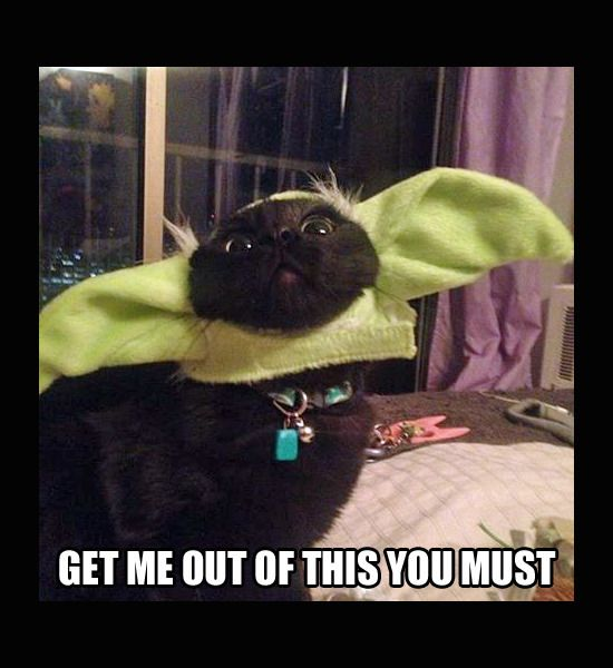 May The 4th Be With You Cat: 163 Best May The Fourth Be With You Images On Pinterest