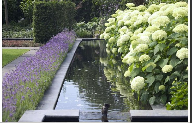 love this - lavender in front, hydrangea in the back