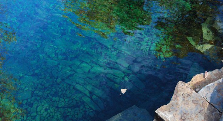 426 Best Swim Pond Images On Pinterest Swim Backyard