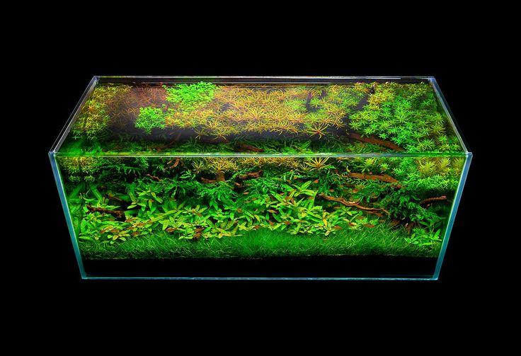 Hardscape | Aquarium design, Aquascape, Aquarium