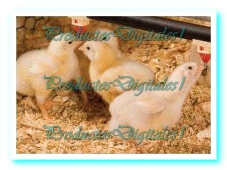 Manuales cria de aves de corral pollos de engorde gallinas ponedoras cria de patos + regalo.