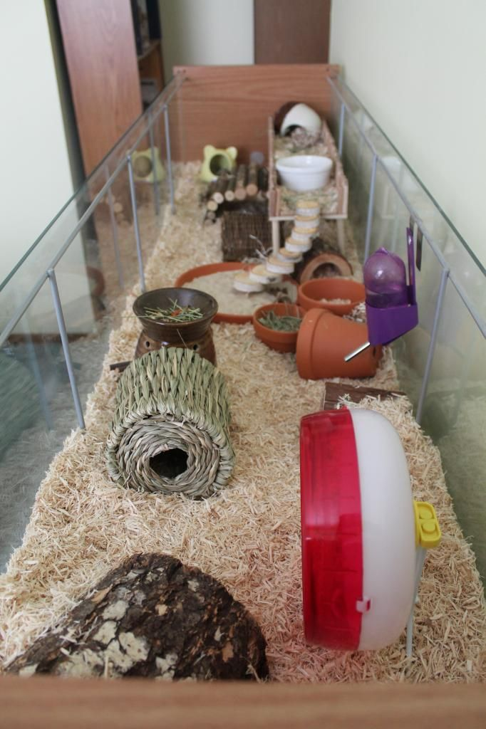 Best 25 Hamster Cages Ideas On Pinterest Hamster Ideas