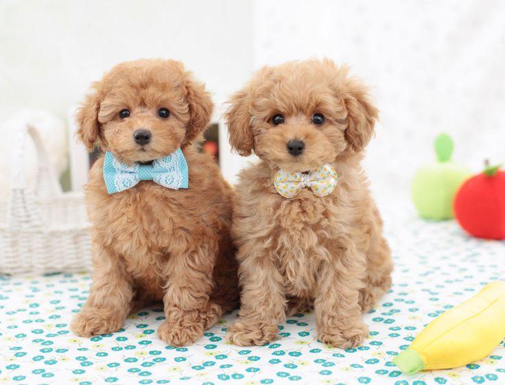 Tous les chiens nés en 2015, et qui possèdent un pedigree, répondront à un doux nom commençant par la lettre L. Ce système de lettrage permet de faciliter les consultations et de mettre de l'ordre dans le registre civil canin. On vous a concocté un petit dico d'inspirations pour vous aider à trouver le bon prénom pour votre animal. Le saviez-vous ? Les lettres K, Q, W, X, Y et Z ont été supprimées par la Société centrale canine car elles ont été jugées trop restrictives.