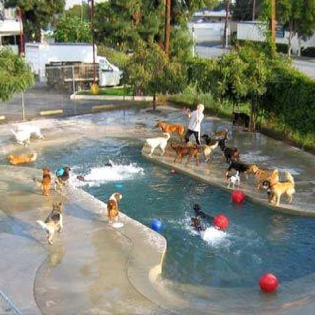 Doggy Daycare and Cage-Free Boarding — Los Angeles