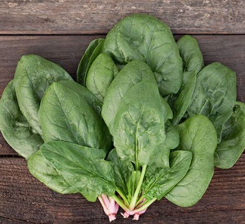 Corvair F1 Spinach Seed
