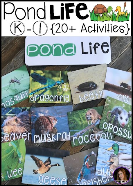 Pond Literacy Science and Writing Activities {20+}