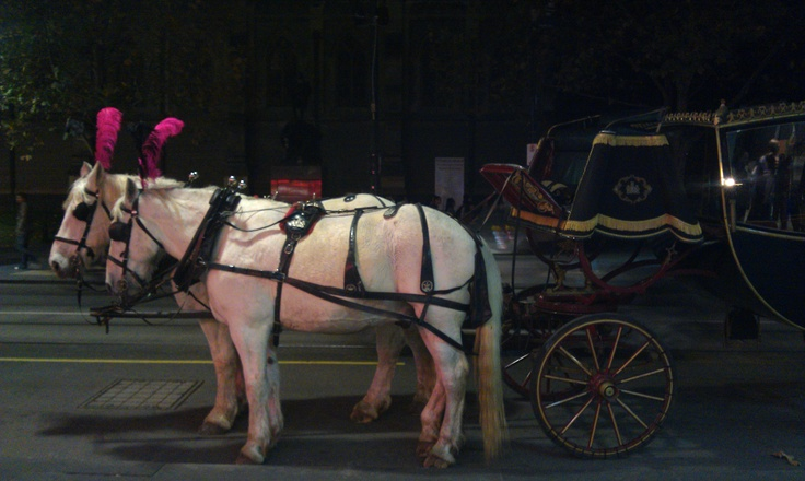 Feathers, horse drawn carriage - it reminded me of Cinderella.... Street of Melbourne, Australia 2011