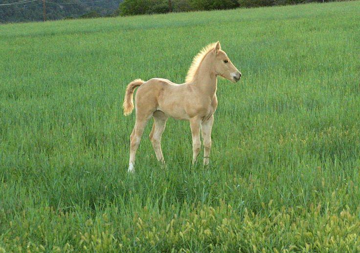 images of ponies | BabyAnimalz .com | Ponies~ | Pinterest ...