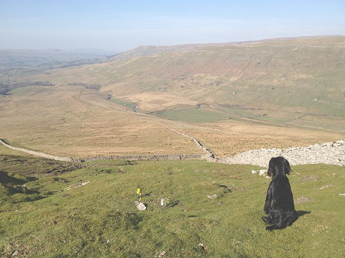 My other rocker cocker spaniel 'Berry' loves to sit and watch the joys of Spring when we visit the Yorkshire Dales. I'm keen to bring some 'green' into my home decor designs to remind me of the vast rolling hills we climb together :)