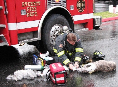 """Exciting image of """"a real human being."""" / An Everett Firefighter gives oxygen to 2 dogs Sunday morning. Both recovered."""