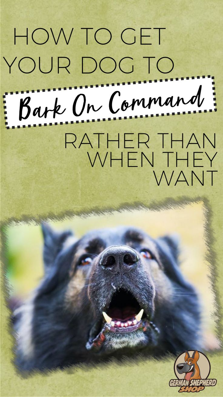 How to get your dog to bark on command rather than when