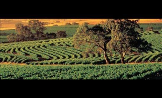 St Hallett Winery