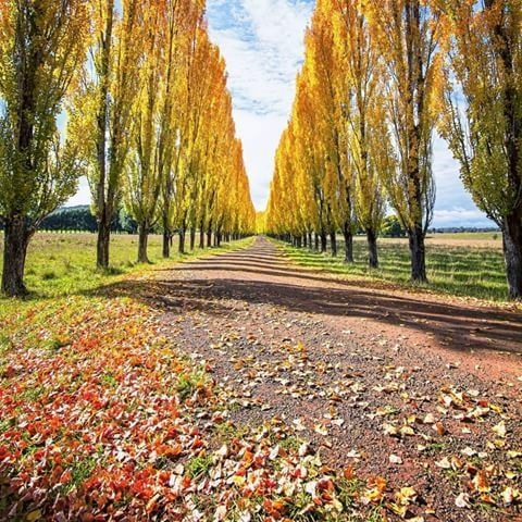 Blairmore and the colours of autumn - one of the highlights of autumn in the Glen Innes Highlands.  Photo by @focusedonadventure