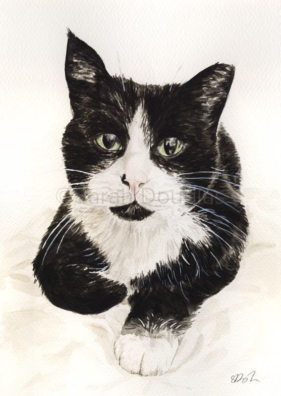 Watercolour pet portrait of Tommy the black and white cat by Sarah Douglas