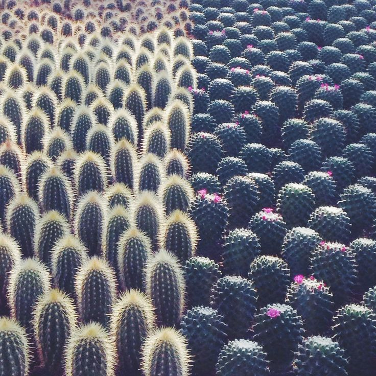 Cactus | Succulents | Plants | Outdoors | Interior Design | Pattern | Wallpaper