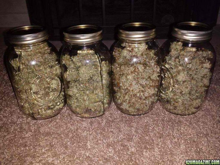Cannabis Cultivation Using Own Grow Medium Mix