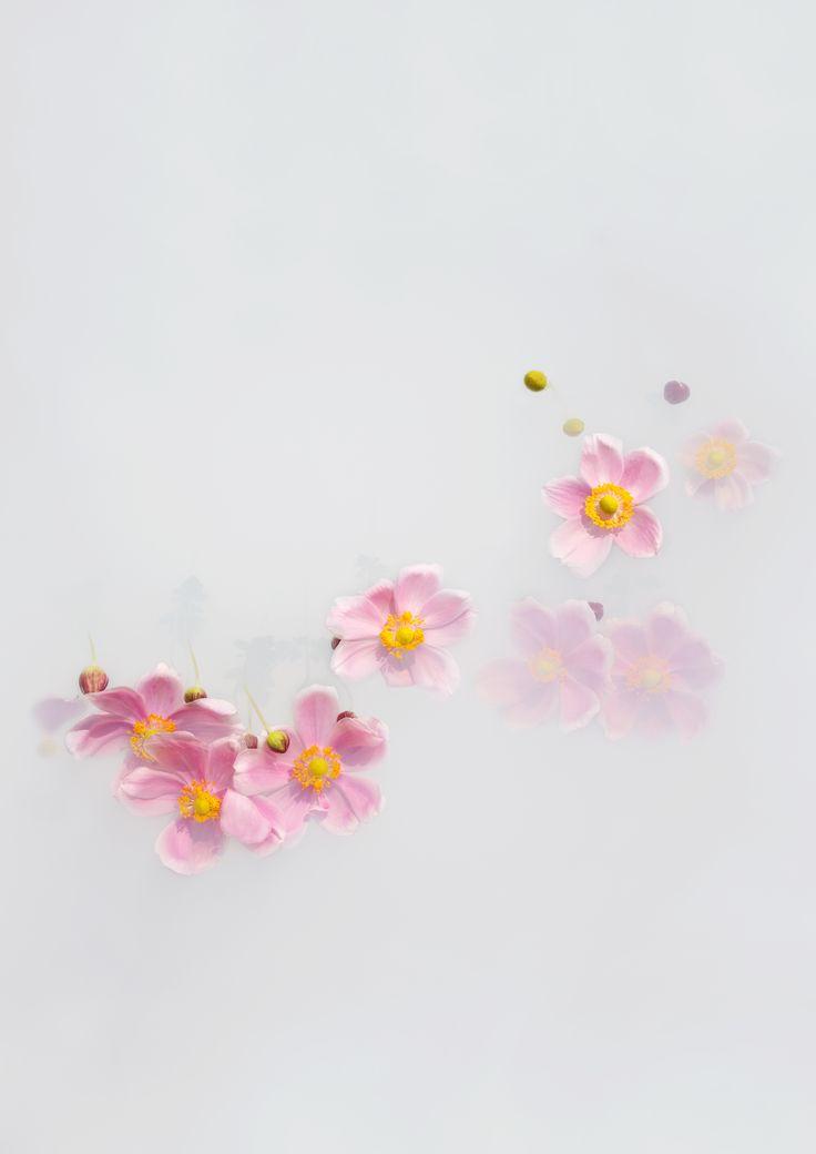'Wind Flower' Limited Edition Print by Artist, Catherine Jensen