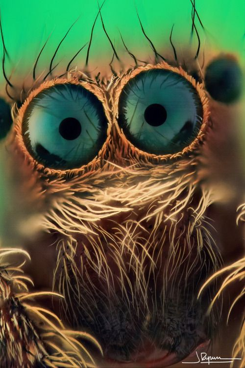 Gros plan sur les yeux d'une araignée