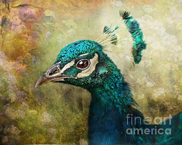 Portrait Of A Peacock by Pauline Fowler