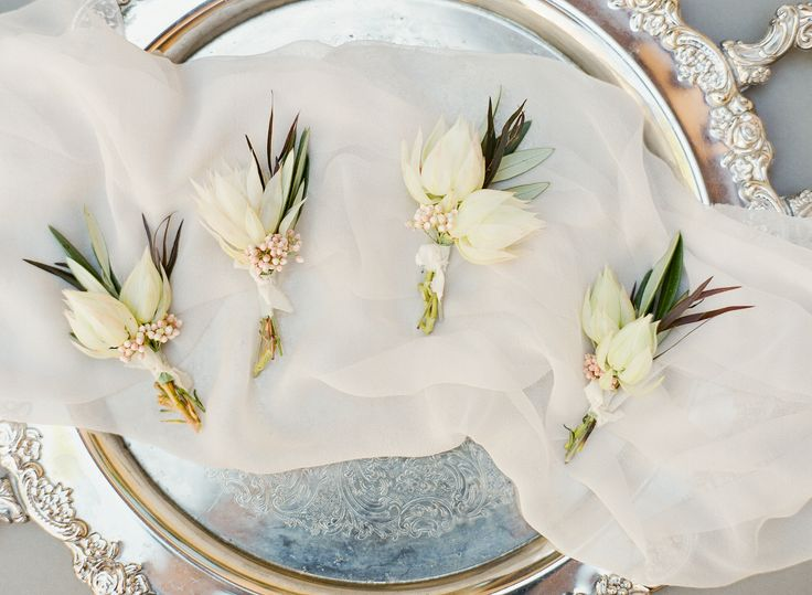 boutonnieres of blushing bride protea, rice flower, agonis leaves and olive leaves tied in silk ribbon.