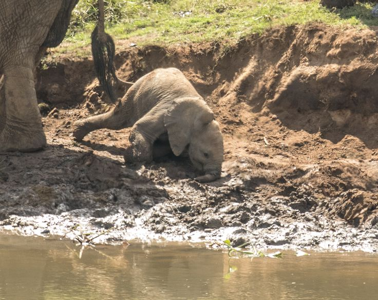 #elephant at Kambaku River Lodge