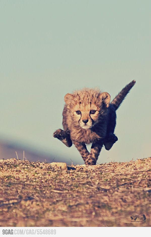 Amazing Baby Cheetah.