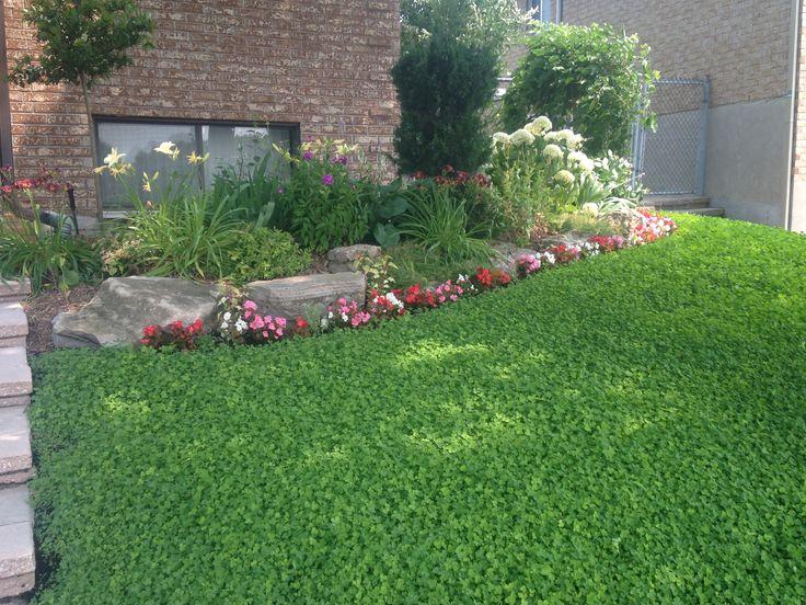 29 best front yard plants take 2 images on pinterest front gardens front yards and backyard. Black Bedroom Furniture Sets. Home Design Ideas